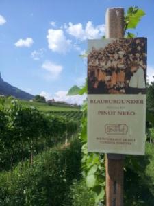 Vista sulle vigne Stroblhof