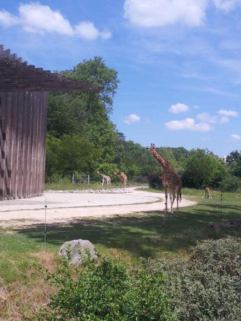 Lo zoo del parco Tete d'or