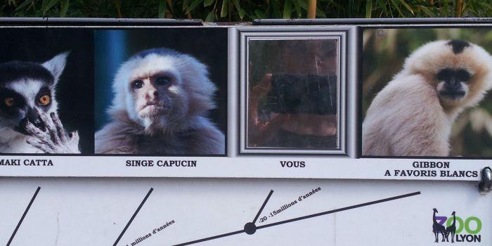 Chi è il parente più vicino al gibbone???
