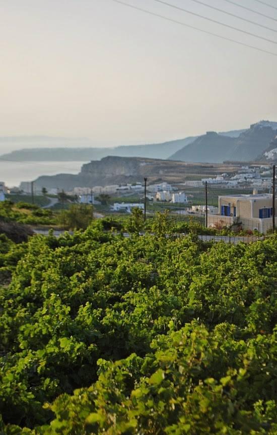 Le vigne di Santorini