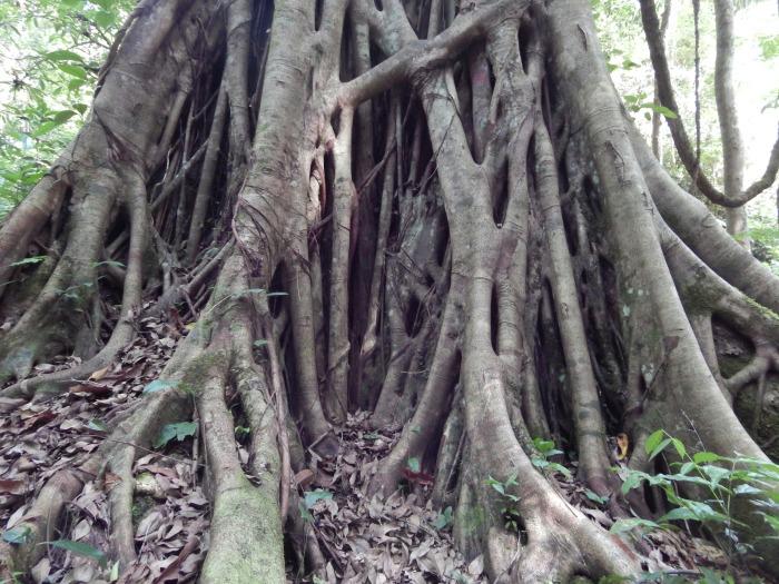 Alberelli nella giungla