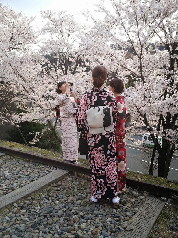 Hanami a Kyoto