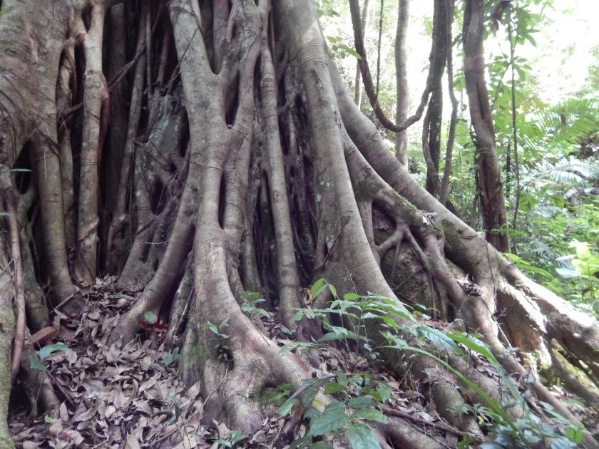 Un albero nella foresta pluviale