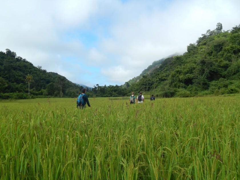 Trekking nella giungla in Laos - le risaie