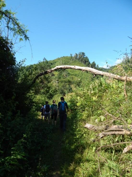 Trekking nella giungla in Laos